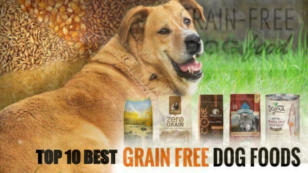 Top 10 Best Grain Free Dog Foods in 2020