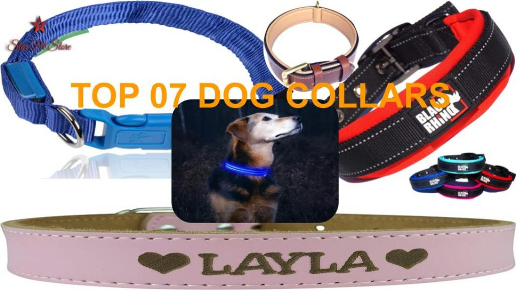 Top 07 Dog Collors You Must Know about